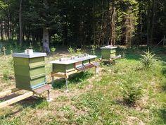Bienenstand Hohe Mandel