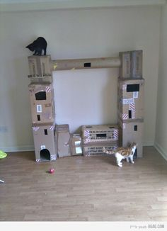 What to do with all our moving boxes...CAT GYM