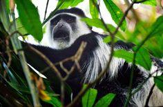 AmVictoriasee sollen 10.000 Hektar Wald für…