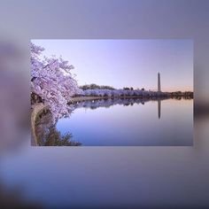 【tmax44】さんのInstagramをピンしています。 《A beautiful view of Cherry blossoms Washington DC #picoftheday #igerscaptures #washingtondc #dc #washingtonmonument #potomac #potomacriver #monument #river #reflection #beautiful #view #cherryblossoms #flower #travel #traveling #traveler #tourism #likes4likes #igers》