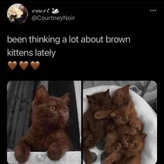 Cute Baby Cats, Kittens Cutest, Cute Babies, Brown Kitten, Brown Cat, Baby Animals, Cute Animals, I Hate My Life, Cute Dogs And Puppies