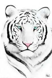 Image result for how to draw a tiger face step by step