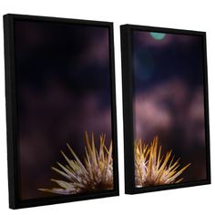 """ArtWall Obviousness Has Its Advantages by Mark Ross 2 Piece Framed Photographic Print Set Size: 24"""" H x 32"""" W x 2"""" D"""