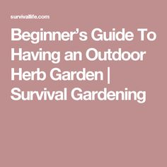 Beginner's Guide To Having an Outdoor Herb Garden   Survival Gardening
