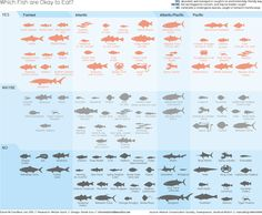 Which fish are OK to eat? This Infographic helps you choose abundant, well-managed and environmentally friendly seafood.