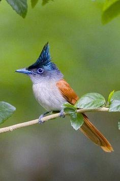 Kinds Of Birds, All Birds, Little Birds, Love Birds, Pretty Birds, Beautiful Birds, Animals Beautiful, Cute Animals, Exotic Birds