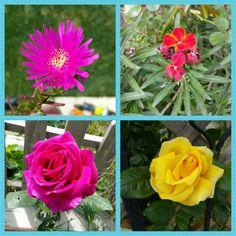 Bahçemizin güzellikleri  #bahçemiz #bahçemizden