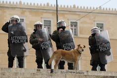 Loukanikos The 'Riot Dog' Dies - Loukanikos was probably the most photographed participant in Athens' years of riots and protests.