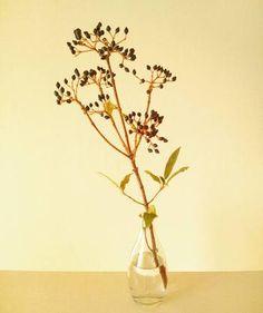 敢えて枝を長くすることでシンプルなのにスタイリッシュな印象に。ビバーナムティヌスの黒い実がよりオシャレ。