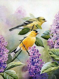 花鸟画 | 艺术家 Susan Bourdet - 湾仔 网站
