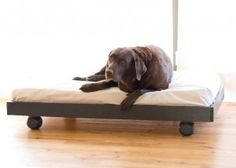 diy dog bed from crib mattress. This is such fantastic idea for large dogs! This is also easy to clean!
