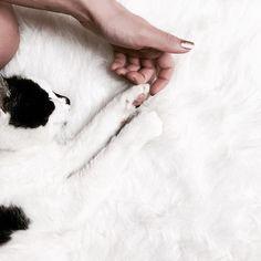 "Polubienia: 59, komentarze: 1 – U L A🦄 (@_bibelota) na Instagramie: ""🐄 #love #white #tuesday #cat #fur  #gold #black"""