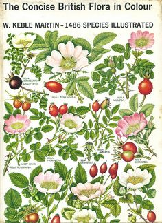 The Concise British Flora by sarcoptiform, via Flickr