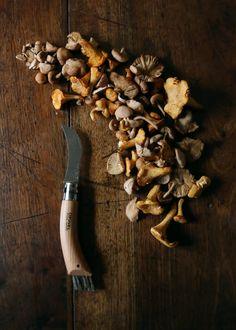 mushrooms // opinel
