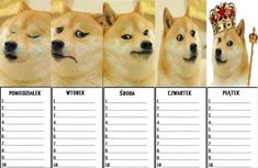 School Schedule, School Planner, Fitness Planner, Wtf Funny, Lesson Plans, Back To School, Corgi, Lol, How To Plan