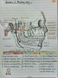 Necessary Dental Hygienist Study Dental Assistant Study, Dental Hygiene Student, Oral Hygiene, Dental Life, Dental Health, Oral Health, Dental Anatomy, Medical Anatomy, Health Education