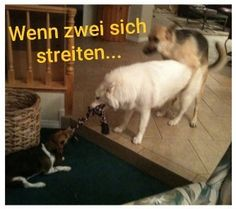 Tier Fotos, Humor, All Dogs, Lol, Memes, Funny, Animals, Funny Animal Photos, Funny Animals