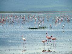 Flamingo's Paradise by Y0UR-N3M3515.deviantart.com on @deviantART