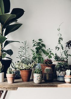 Beautiful inspiration for plant loving folk