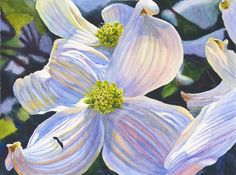 White Dogwood Art Watercolor Original Painting by by CathyHillegas, $295.00
