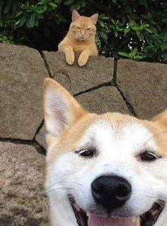 You taking a pic of a cat? I love cats! (Photo Credit: Pinterest via acacia226.tumblr.com)