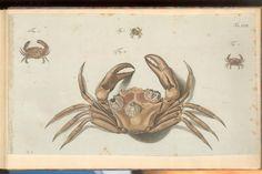 Herbst Crabs & Lobsters Plate LVII