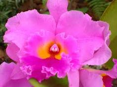 Image result for Orchids