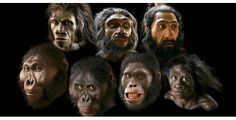 harvestheart: Artist John Gurche used the latest forensic techniques, fossil discoveries, and 20 years of experience to create the lifelike reconstructions of early humans on display in the Hall of Human Origins. The painstaking process required a detailed knowledge of human and ape anatomy. It took Gurche 2½ years to complete these busts.