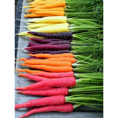 Rainbow Carrot Mix - six crazy colors, 350 heirloom seeds, spring... ($5.95) ❤ liked on Polyvore featuring food