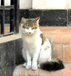 #HotelOasis #Cairo #Egypt #Cat  This nice flurry cat has found a home in this international airport hotel much to the delight of everyone.
