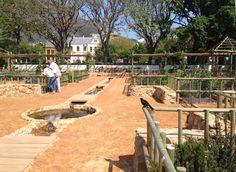 Urban Landscape Solutions - a Cape Town based company offering premier landscaping services. Herb Garden, Vegetable Garden, Landscape Solutions, East India Company, Landscaping Company, Medicinal Herbs, Urban Landscape, Car Park, Fruit Trees