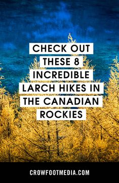 Larch madness is upon us! Here are just a few trails that'll take you to those golden needles. Which ones would you add? Larch Tree, Conifer Trees, Canadian Rockies, Madness, Hiking, The Incredibles, Walks, Trekking, Hill Walking