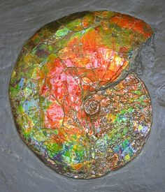 Ammolite is a fossil. The matter making up the iridescent material is the fossilized remains of a seagoing animal, and is made mostly of arragonite.