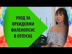 Орхидеи Фаленопсис - Уход перед Отпуском - YouTube