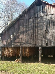 tobacco farm. so southern.