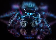 Using Ultraviolet Light to Make Nature Fluoresce in Photos Insect Photography, Nature Photography Tips, Double Exposure Photography, Levitation Photography, Photography Tips For Beginners, Photography Lessons, Photography Projects, Beach Photography, Abstract Photography