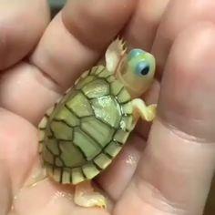 Cute Little Animals, Cute Funny Animals, Cute Dogs, Baby Animals Pictures, Cute Animal Pictures, Animal Pics, Baby Pictures, Cute Baby Turtles, Turtle Baby