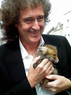 Brian May from Queen doing his best for foxes and animal welfare. Queen Brian May, I Am A Queen, Save The Queen, John Deacon, Adam Lambert, Rock And Roll, Queen Guitarist, Roger Taylor, Ben Hardy