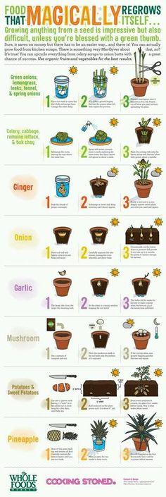 HOW+TO+grow+plants9.jpg 321×960 Pixel