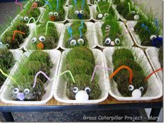 grass caterpillar craft project Too bad my kids are too old for this...will need to keep this idea for potential grandkids....
