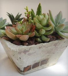 Mystic Oasis Square Cement Planter with Succulents