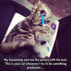 """Cats be cats. That translates to """"Cats want attention when it's most inconvenient for you."""""""