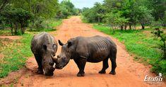 Elephant, Places, Animals, Animales, Animaux, Elephants, Animal, Animais, Lugares