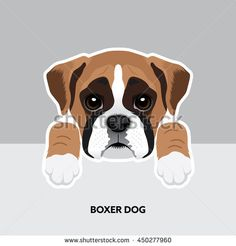 Vector Illustration Portrait of Boxer dog Puppy. Dog isolated
