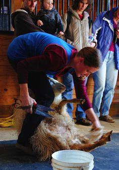 amy-karasz-shearing