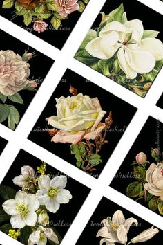 Digital Collage Sheet Flowers on black by Templates4Sellers