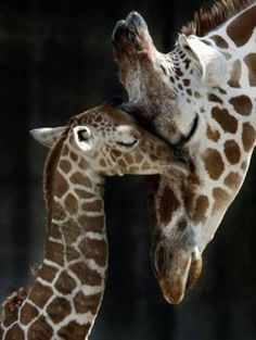 Mommy & baby, En Minik Dostlar