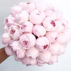 I could genuinely bite this perfect wedding bouquet. I'm not having a bouquet when I get married but I would definitely choose peonies if I was! My Flower, Fresh Flowers, Pink Flowers, Beautiful Flowers, Peony Flower, Pink Peony Bouquet, Prettiest Flowers, Flowers Bunch, Peony Rose