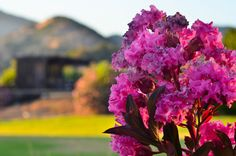 spring flowers in bloom at Duffy's Napa Valley