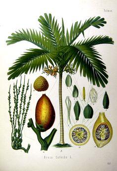Köhler's Medizinal-Pflanzen in naturgetreuen Abbildungen mit kurz erläuterndem…